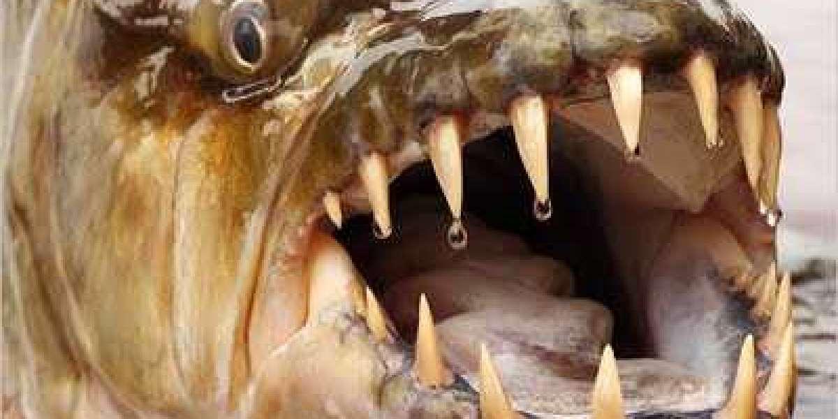 Freshwater Catfish Teeth Crack Exe Full Torrent Activation Pc X32